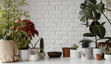 Rośliny które uszcześliwiają